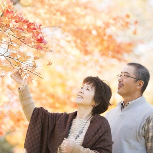 紅葉を眺めるシニア夫婦の写真素材 [FYI04552841]