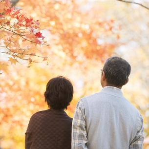 紅葉を眺めるシニア夫婦の後姿の写真素材 [FYI04552853]