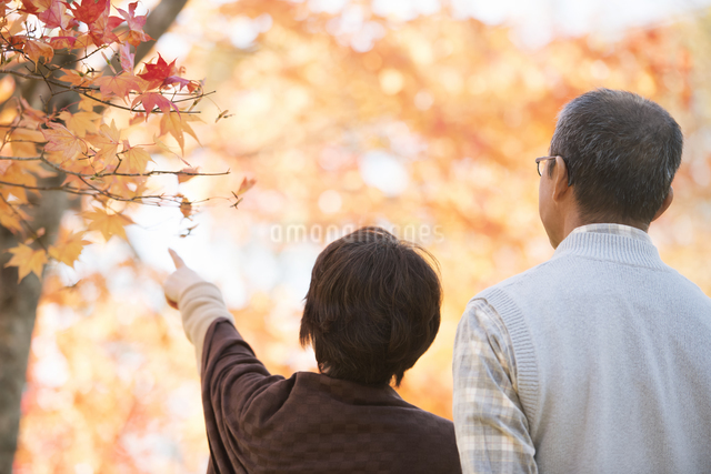 紅葉を眺めるシニア夫婦の後姿の写真素材 [FYI04552862]