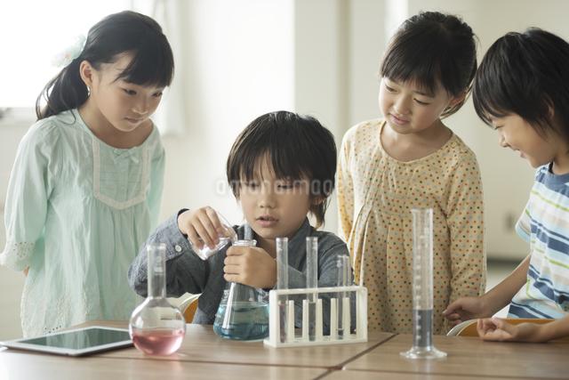 実験をする小学生の写真素材 [FYI04553643]