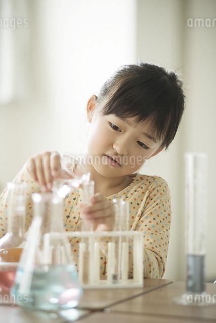 実験をする小学生の写真素材 [FYI04553659]