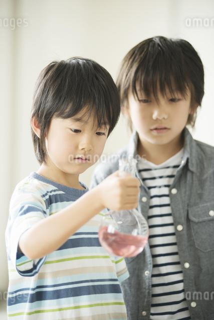 実験をする小学生の写真素材 [FYI04553683]