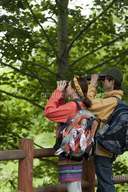バードウォッチングをするカップルの写真素材 [FYI04554818]