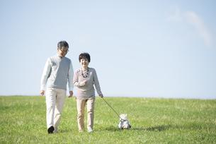 草原で犬の散歩をするシニア夫婦の写真素材 [FYI04557207]