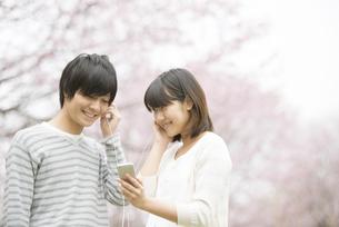 桜の前で音楽を聴くカップルの写真素材 [FYI04557280]