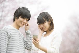桜の前で音楽を聴くカップルの写真素材 [FYI04557282]
