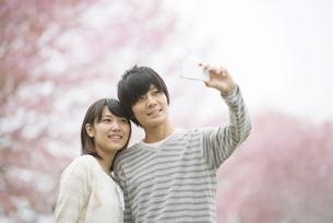 桜の前で自撮りをするカップルの写真素材 [FYI04557305]