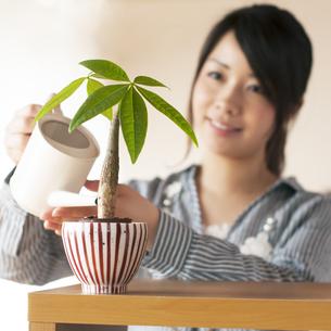 植物に水やりをする女性の写真素材 [FYI04557488]