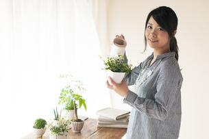 植物に水やりをする女性の写真素材 [FYI04557503]