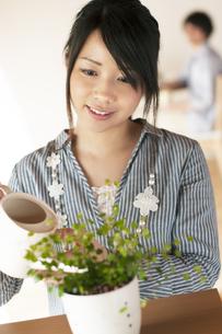 植物に水やりをする女性の写真素材 [FYI04557511]