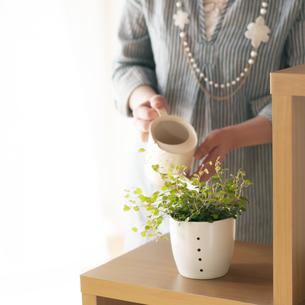 植物に水やりをする女性の手元の写真素材 [FYI04557514]