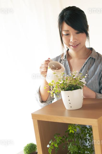 植物に水やりをする女性の写真素材 [FYI04557515]