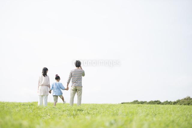 草原で手をつなぐ家族の後姿の写真素材 [FYI04558063]