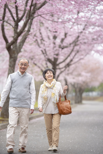 桜の中を歩くシニア夫婦の写真素材 [FYI04558345]