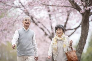 桜の中を歩くシニア夫婦の写真素材 [FYI04558347]