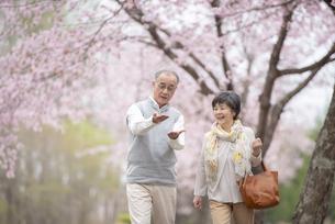 桜の中で立ち止まるシニア夫婦の写真素材 [FYI04558349]