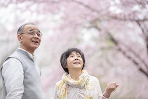 桜を見つめるシニア夫婦の写真素材 [FYI04558354]