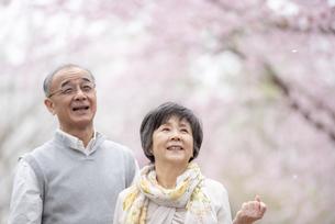 桜を見上げるシニア夫婦の写真素材 [FYI04558355]