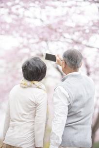 スマホで撮影をするシニア夫婦の後ろ姿の写真素材 [FYI04558359]