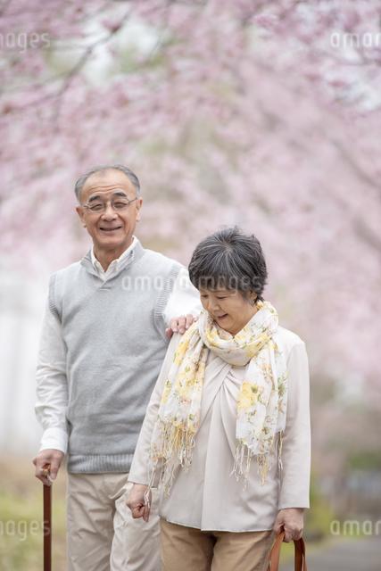 桜の中を散歩するシニア夫婦の写真素材 [FYI04558386]