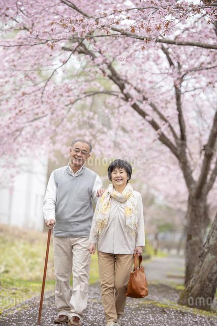 桜の中を散歩するシニア夫婦の写真素材 [FYI04558387]