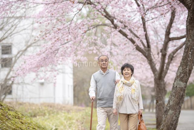 桜の中を散歩するシニア夫婦の写真素材 [FYI04558388]
