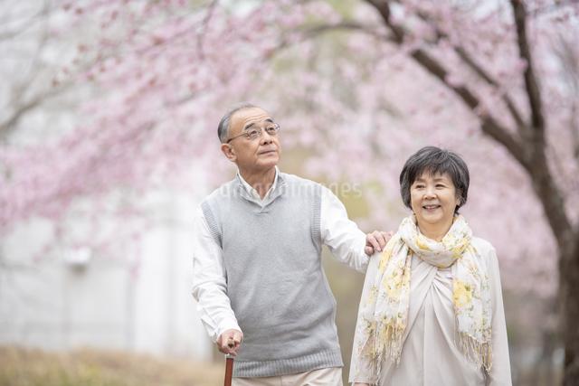 桜の中を散歩するシニア夫婦の写真素材 [FYI04558389]