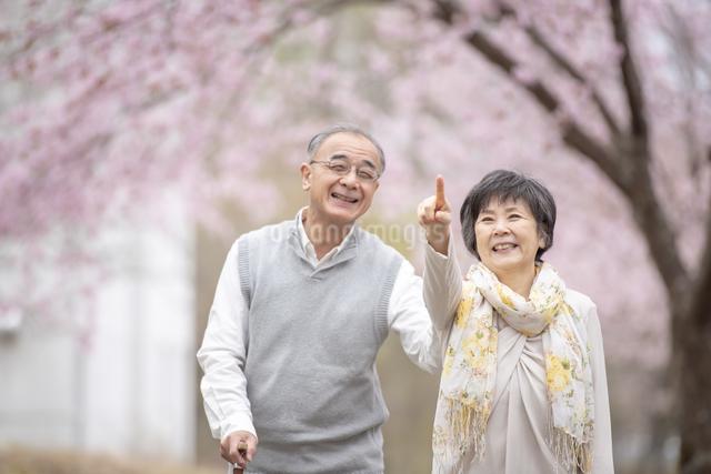 桜の中を散歩するシニア夫婦の写真素材 [FYI04558390]