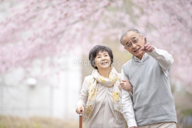 桜の中を散歩するシニア夫婦の写真素材 [FYI04558391]