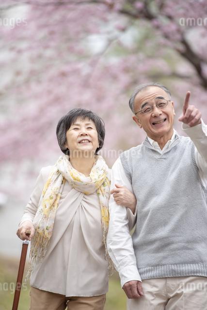 桜の中を散歩するシニア夫婦の写真素材 [FYI04558392]