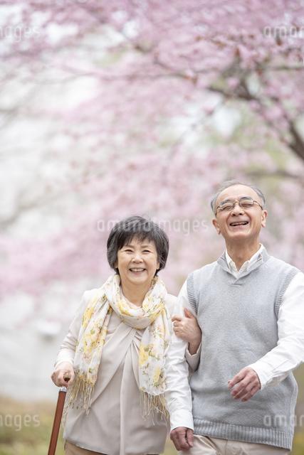 桜の中を散歩するシニア夫婦の写真素材 [FYI04558393]