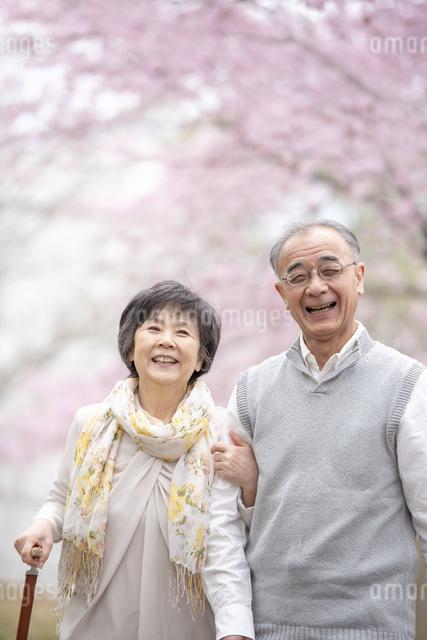 桜の中を散歩するシニア夫婦の写真素材 [FYI04558394]