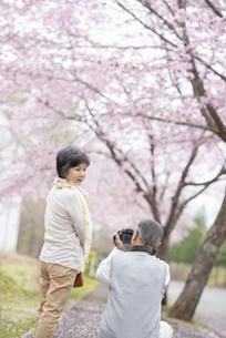 桜の中で写真を撮るシニア夫婦の写真素材 [FYI04558401]