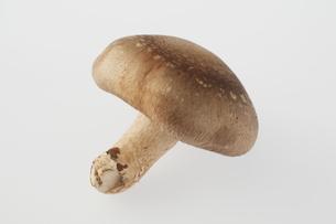 椎茸の写真素材 [FYI04559065]