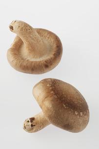 椎茸の写真素材 [FYI04559067]