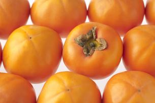 柿の写真素材 [FYI04559124]
