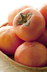 柿の写真素材 [FYI04559216]