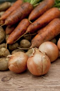 収穫した野菜の写真素材 [FYI04559394]