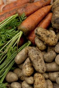 収穫した野菜の写真素材 [FYI04559395]