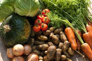 収穫した野菜の写真素材 [FYI04559468]