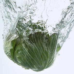 水に落としたキャベツの写真素材 [FYI04559753]