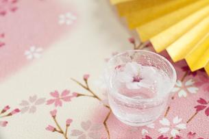 おちょこと桜の写真素材 [FYI04559929]