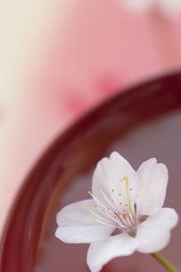 盃と桜の写真素材 [FYI04559932]