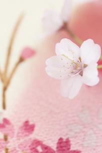 桜の写真素材 [FYI04559933]