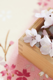 桜と升の写真素材 [FYI04559934]