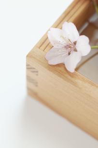 桜と升の写真素材 [FYI04559935]