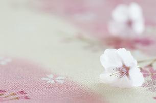 桜の花の写真素材 [FYI04559948]