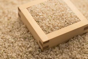玄米の写真素材 [FYI04560112]