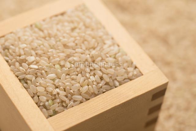 玄米の写真素材 [FYI04560113]