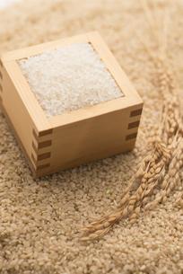 玄米と白米と稲穂の写真素材 [FYI04560115]